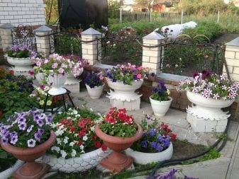 100 лучших идей: уличные вазоны и горшки для цветов на фото