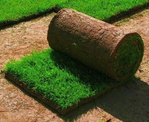 Какой газон лучше посадить на даче: описание и виды трав