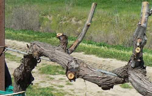 Навес для винограда и его виды