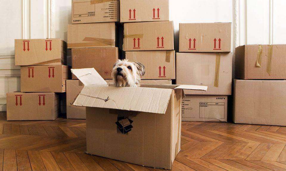 Практичный интерьер: как создать дизайн для легкой уборки, как выбрать стиль помещения, материалы отделки и мебель, как сделать квартиру чище, готовые решения