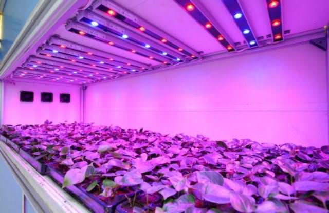Расчет количества светодиодных ламп для освещения теплиц