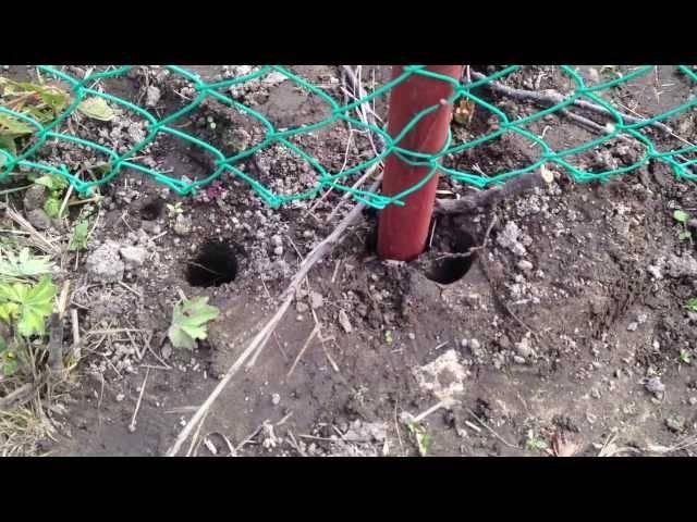 Монтаж забора из сетки-рабицы своими руками на дачном участке