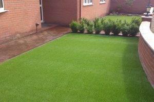 Какую газонную траву лучше посадить на дачном участке: сорта для подмосковья