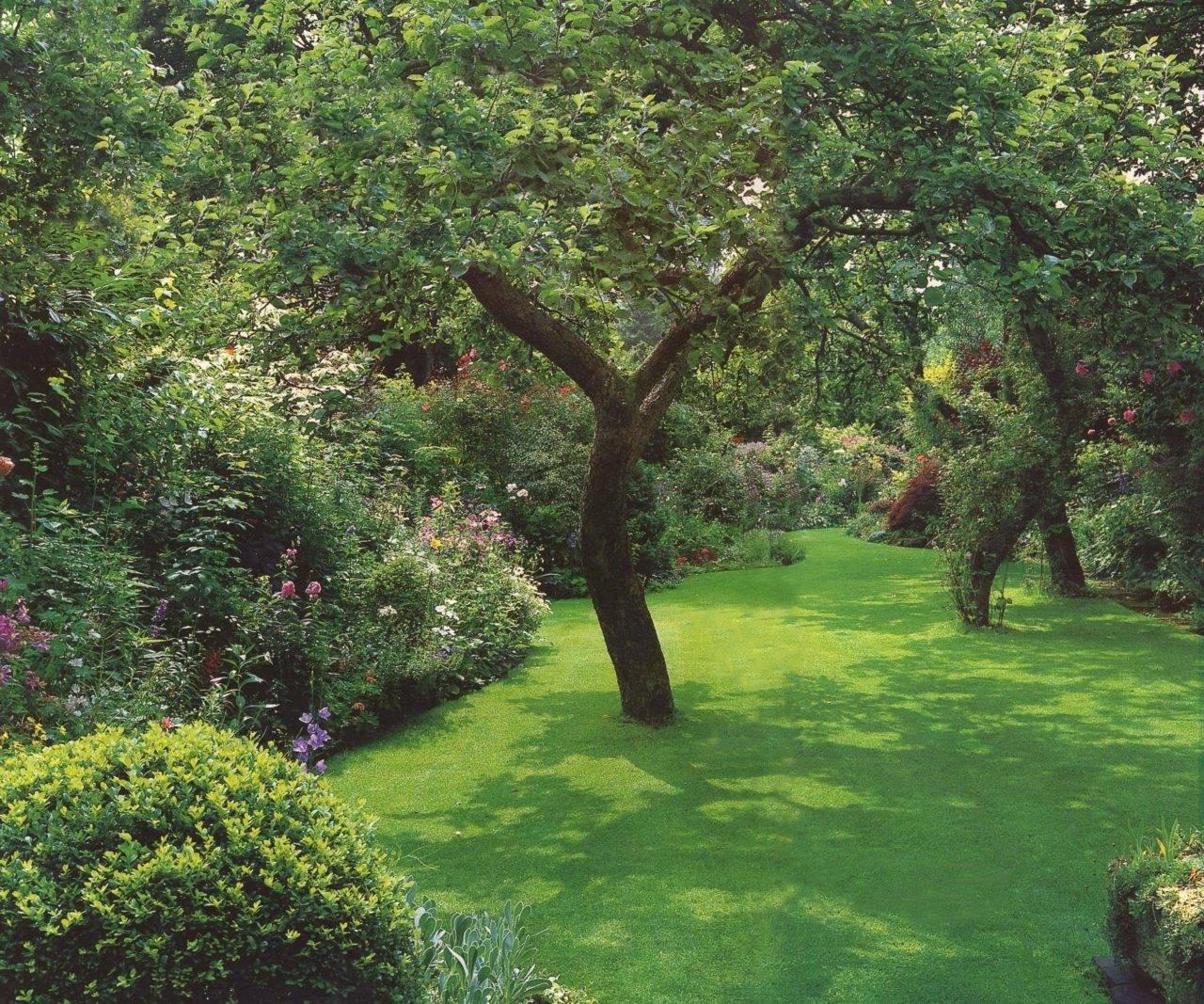 Декоративные растения: 115 фото идей оформления сада и участка