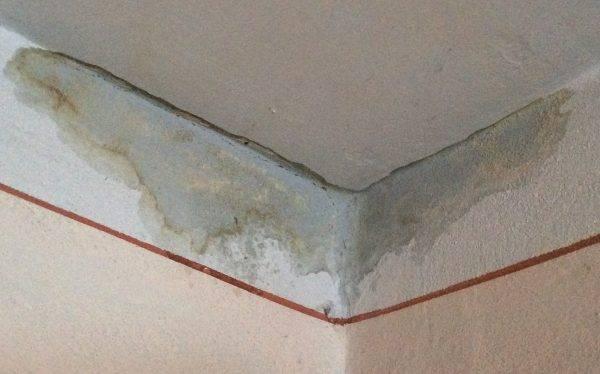 Как избавиться от грибка на стенах: народные средства и химические препараты