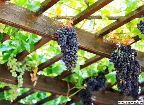Делаем беседку под виноград своими руками