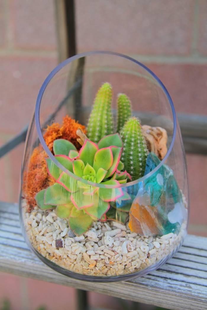 Композиции из суккулентов и кактусов или мини-садики у вас дома