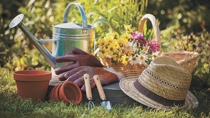 Завершение сезона - уход за садом и обязательные работы | сайт о саде, даче и комнатных растениях.