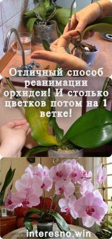7 советов по основам ухода за орхидеями для новичка. фото — ботаничка.ru