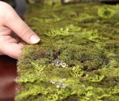 Стабилизированный мох – что это, для чего нужен, плюсы и минусы, виды, как сделать своими руками?