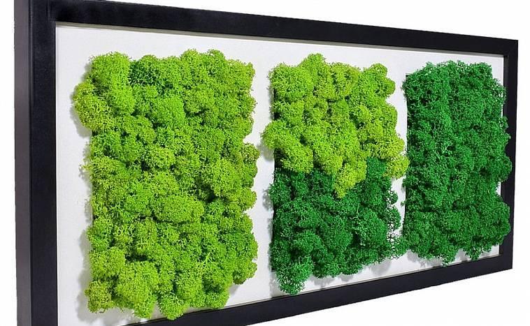 Стабилизированный мох - декор и дизайн интерьера квартиры и дома