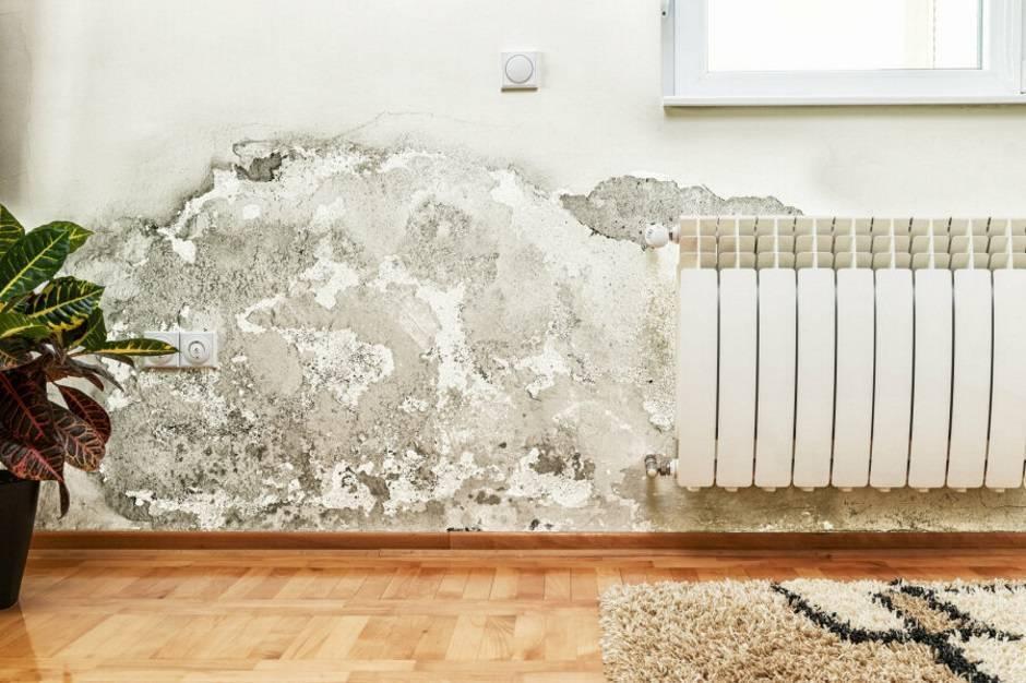 Самые эффективные способы избавиться от плесени на стенах в частном доме: 50 фото