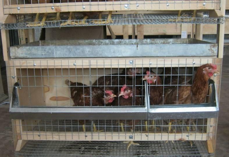 Строительство курятника сколько стоит и что нужно? все про кур.