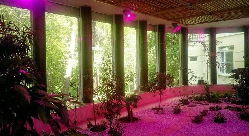 Выбираем лампы для теплицы: правильное освещение зимой, расчет освещенности для роста растений