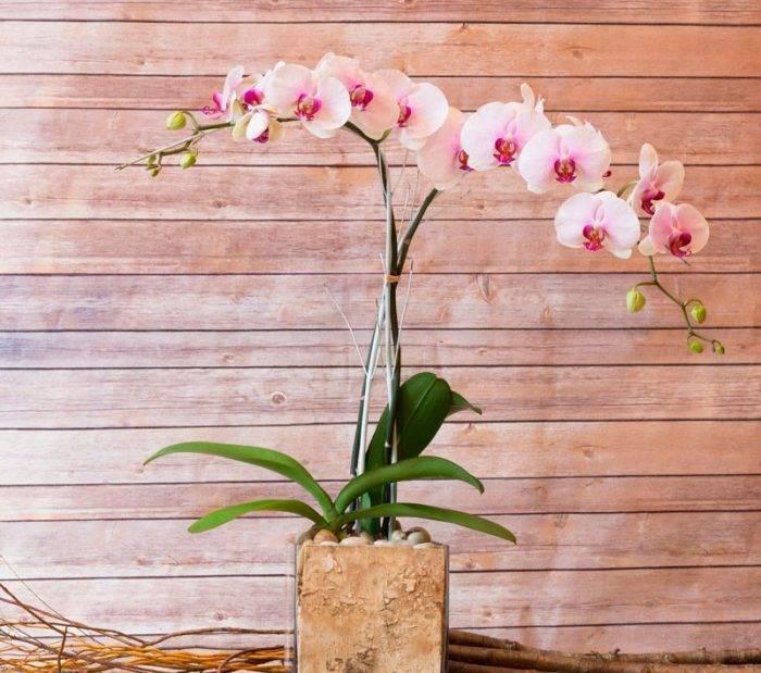 Подсказка для любителей орхидей: как размножить в домашних условиях через цветонос. основные правила и рекомендации
