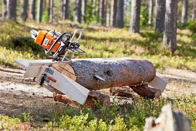 Как правильно спилить дерево бензопилой