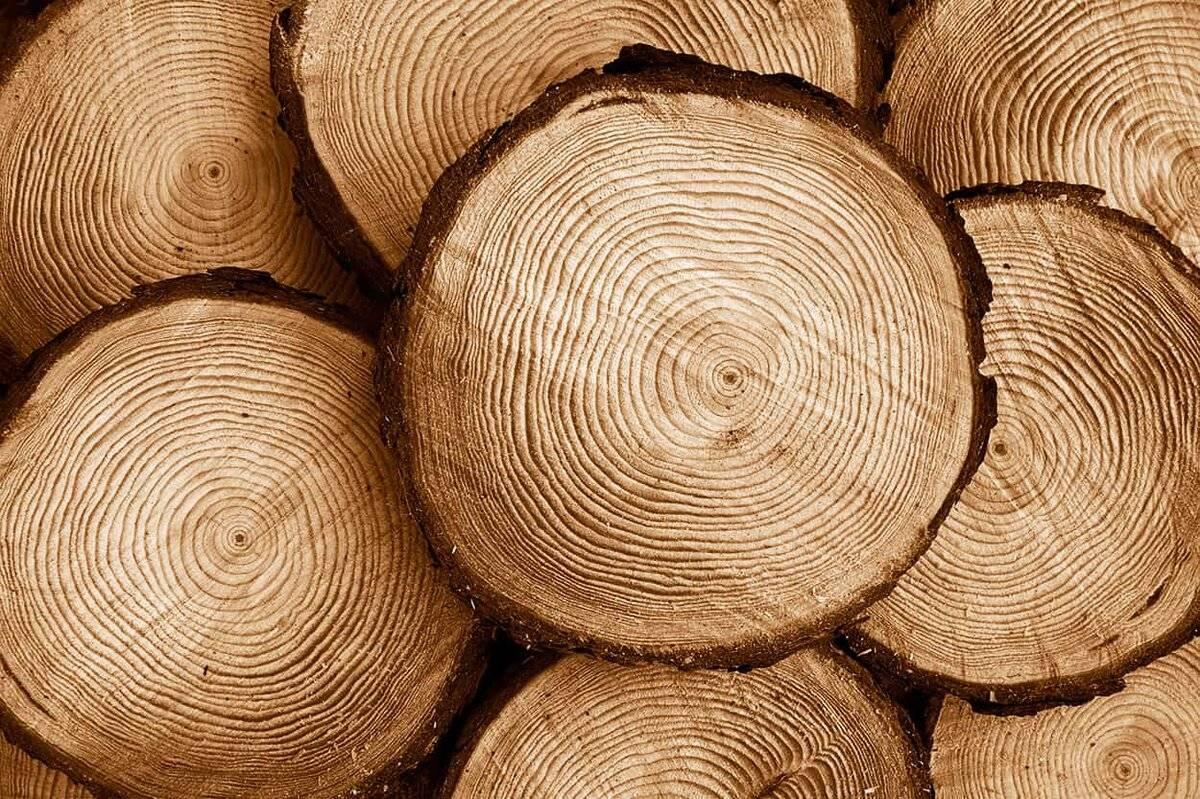 Сушка древесины: способы, технология, хранение