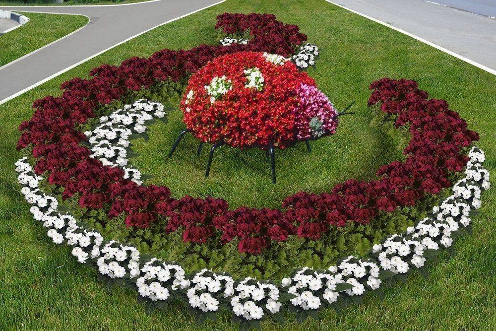 Однолетние цветы для дачи - 125 фото лучших видов однолетников для дачного участка