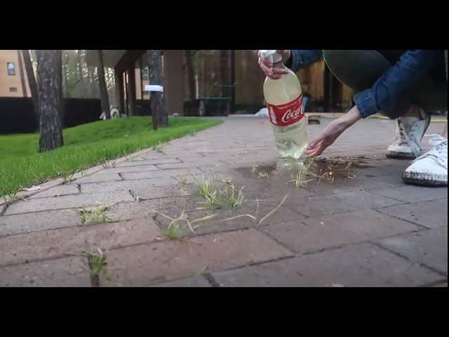 Как избавиться от травы на садовой дорожке. как избавиться от травы на садовой дорожке: методы борьбы с сорнякамиинформационный строительный сайт |