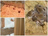 Как выбрать утеплитель, который не грызут мыши и крысы?