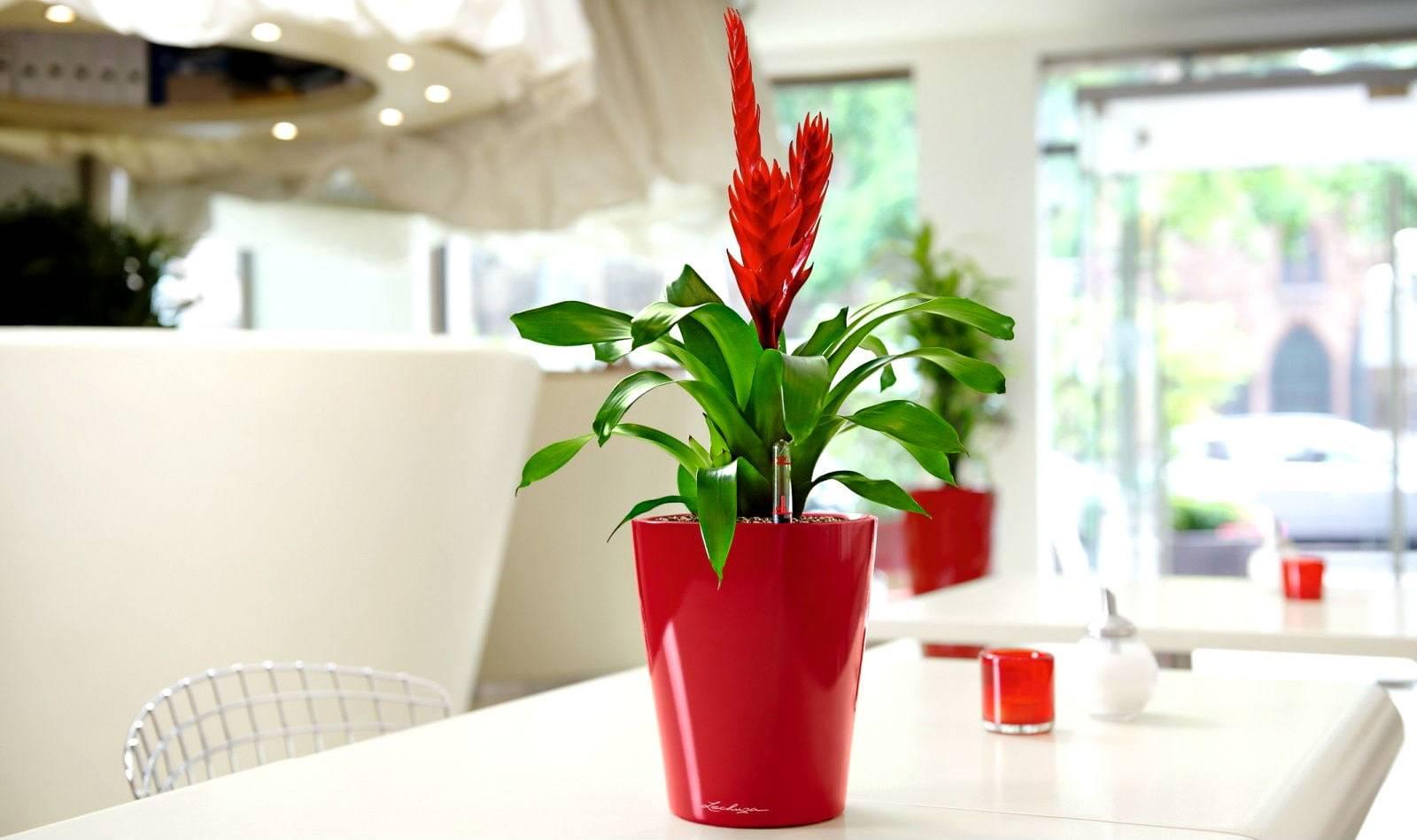 Какие цветы нельзя держать дома и почему? самые опасные цветы!