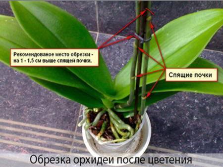 Пересадка и уход за орхидеей в домашних условиях: фото и видео о правильном поливе, подкормке и обрезке цветов фаленопсиса после проведения процедуры