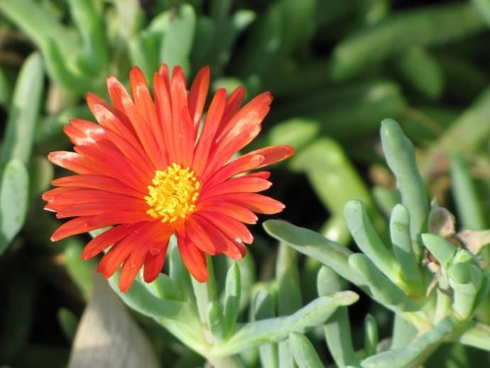 Создание мини-сада из кактусов и суккулентов