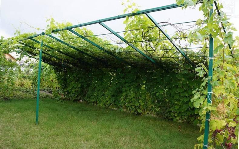 Навес для винограда и его виды - самстрой - строительство, дизайн, архитектура.