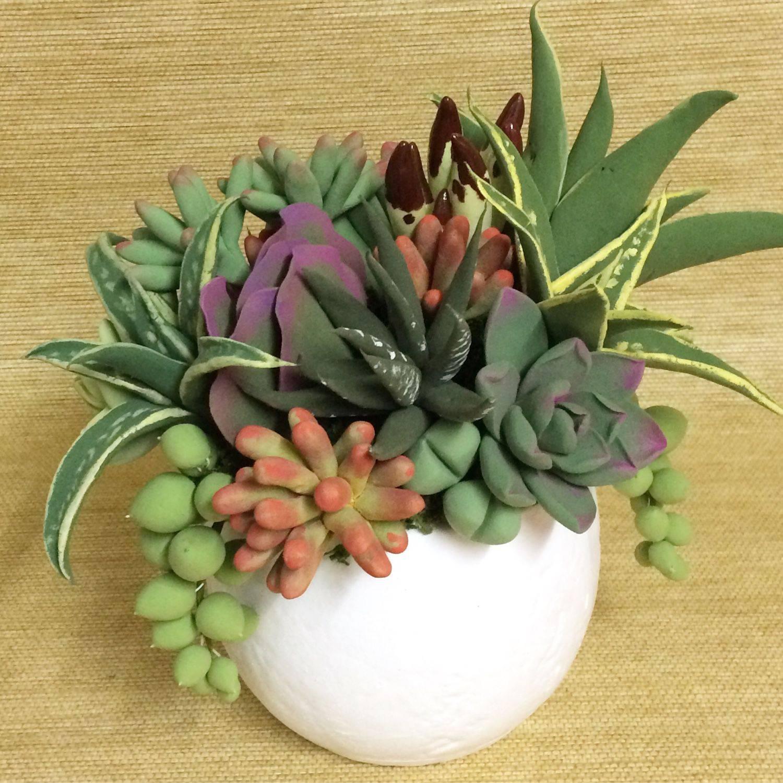 Каталог комнатных растений. фото и названия.