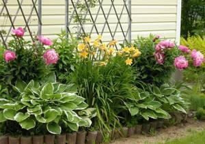 Какие цветы посадить на даче, чтобы цвели - многолетние, однолетние