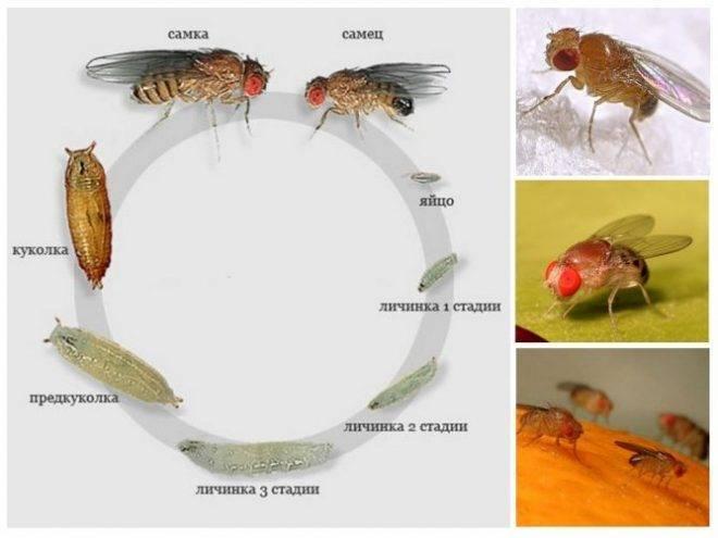Как избавиться от мошек на кухне: откуда берутся насекомые и чем травить