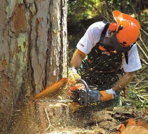 Как правильно спилить дерево бензопилой: руководство для начинающих
