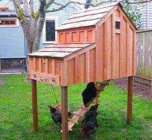 Как построить курятник на 10 кур?