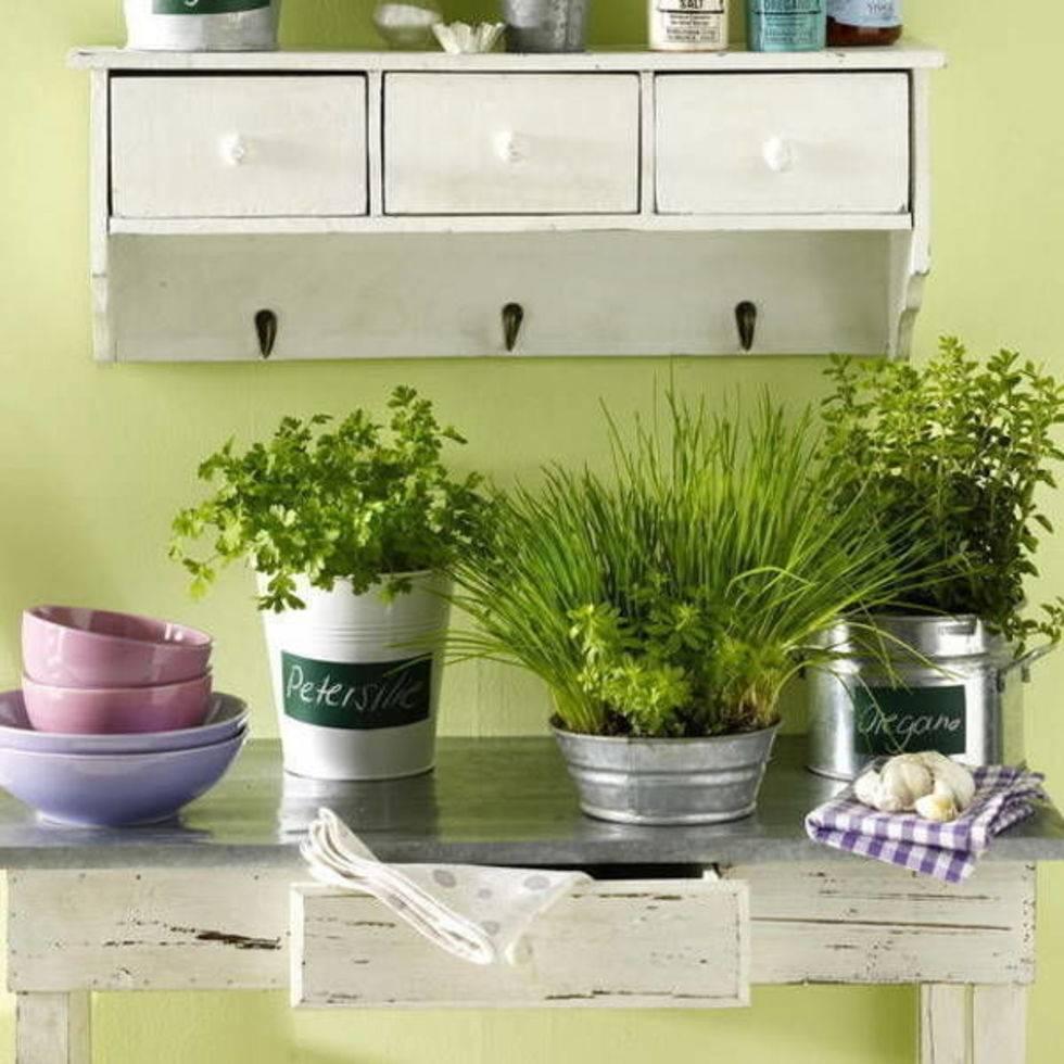 Огород на подоконнике для начинающих: какие овощи и зелень можно вырастить дома