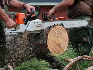 Как спилить дерево бензопилой правильно