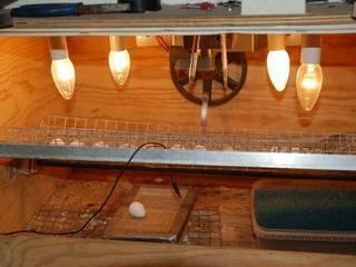 Как сделать инкубатор для яиц своими руками в домашних условиях