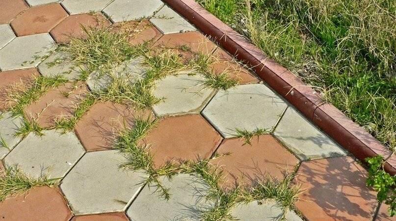 Как эффективно избавится от сорняков на садовой дорожке