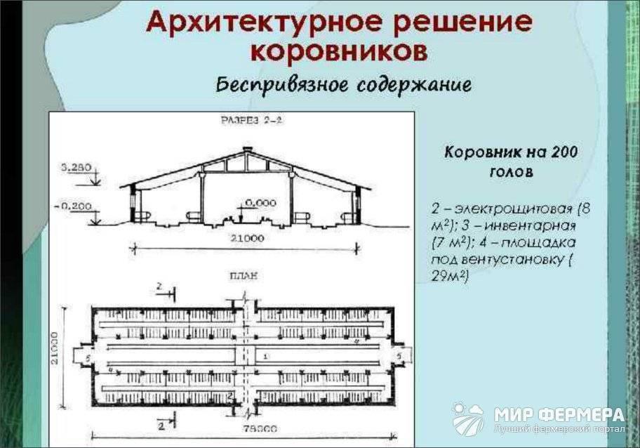 Проект коровника на 100 голов и чертежи для постройки фермы своими руками
