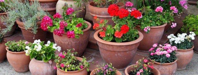 Цветы у подъезда многоквартирного дома: пять лучших решений