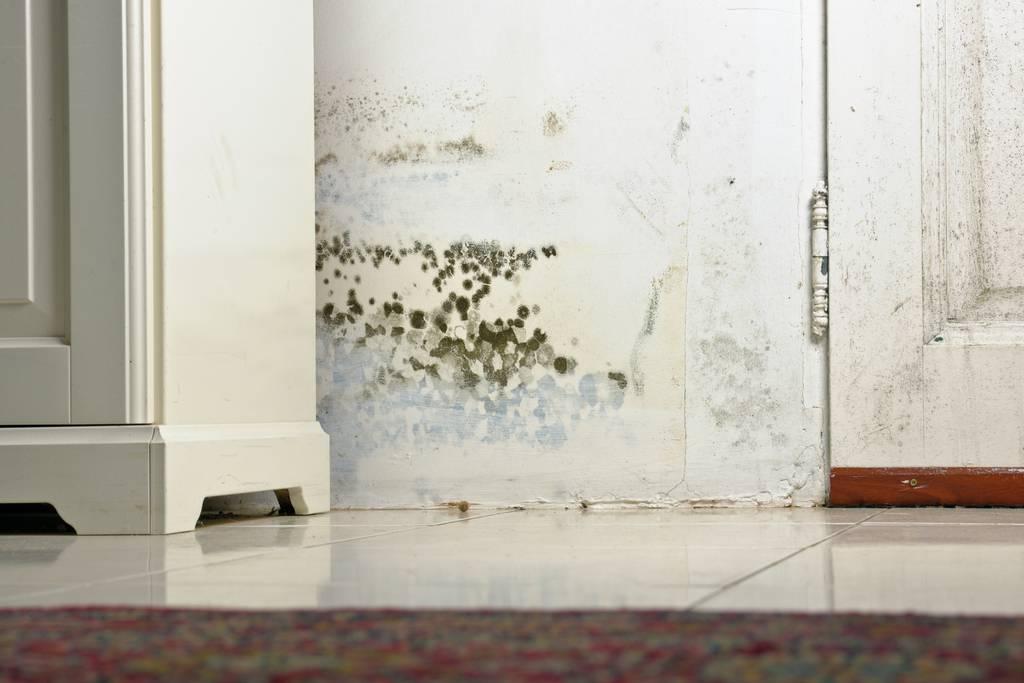 Частный дом: промерзают, мокреют углы, местами появляется плесень.- форум mastergrad