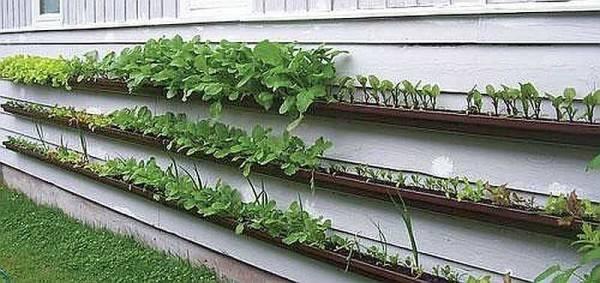Огород на дачном участке - выбор места, правила разбивки и идеи дизайна огорода (175 фото)
