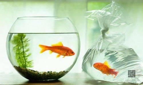 Как сделать аквариум в стене - 28 фото