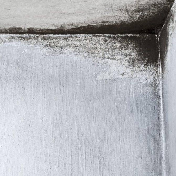 Причины появления плесени на стенах в квартире