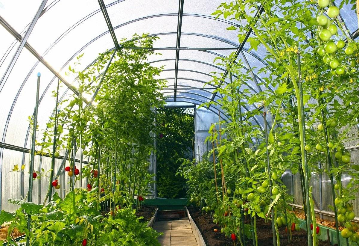 Подогрев грунта теплицы — высокие урожаи и здоровые растения