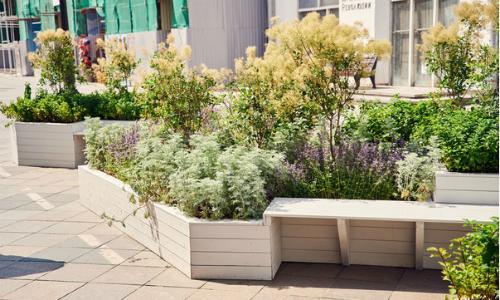 Декоративные растения — лучшие и самые популярные растения для сада (115 фото)