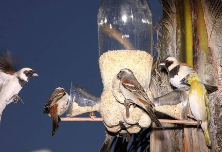 Как сделать кормушку для птиц своими руками: оригинальные и необычные идеи