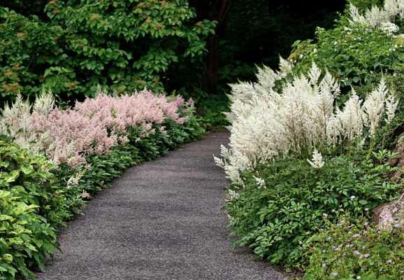 ✅ об астильбе в ландшафтном дизайне (сочетание цветов в саду, на клумбе) - tehnomir32.ru