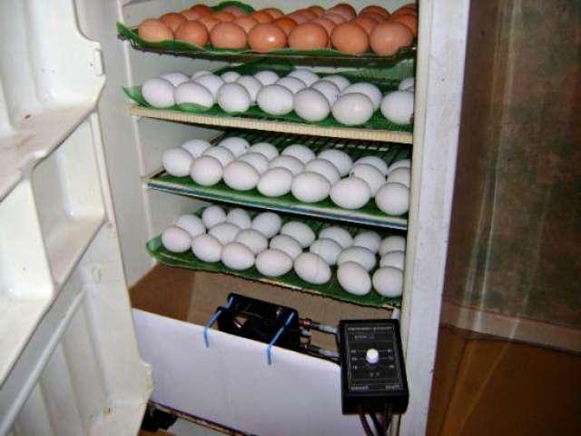 Как изготовить инкубатор для яиц дома