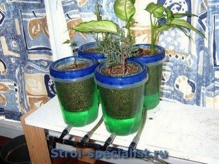 Гидропоника для клубники своими руками: оборудование, выращивание