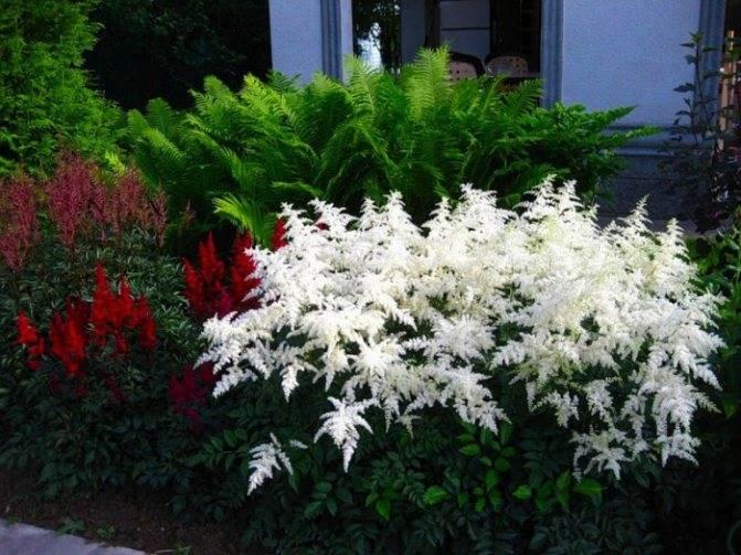 Как вырастить хосты в саду: ландшафтные хитрости, особенности создания и дизайна композиций на даче